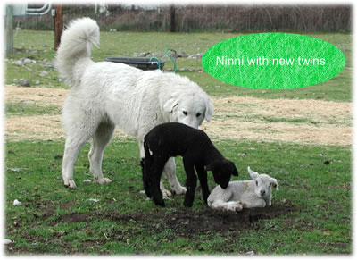 ninni with twins